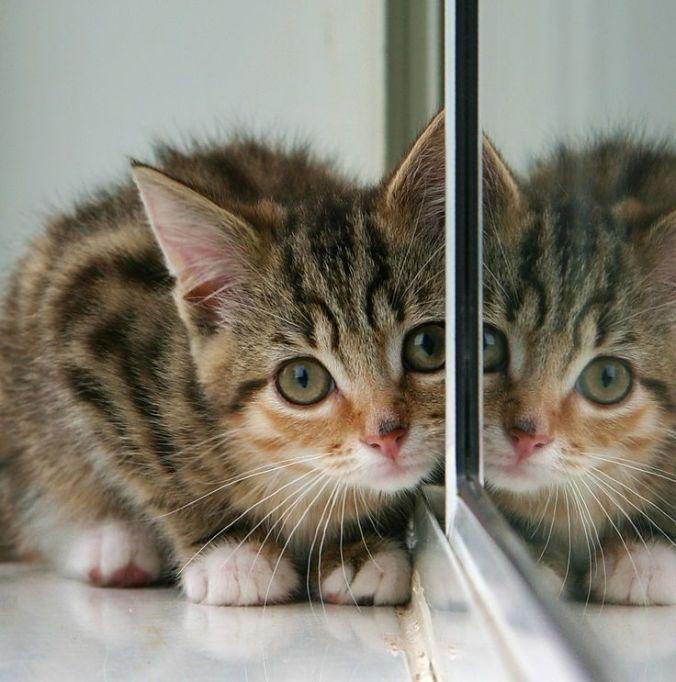 cat in mirror.jpg