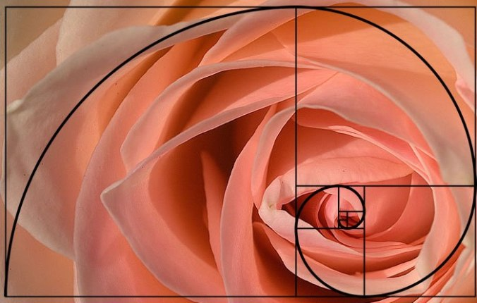 golden ratio nature.jpg