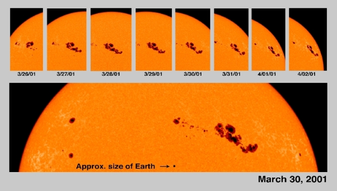 sunspot migration.jpg
