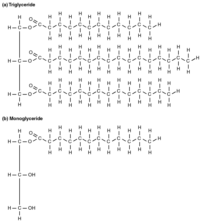 2511_A_Triglyceride_Molecule_(a)_Is_Broken_Down_Into_Monoglycerides_(b).jpg
